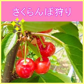 05-0021sakurannbogari