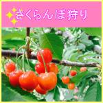 05-0022sakurannbogari